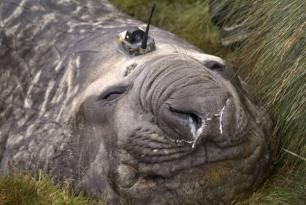 Seals with transistors