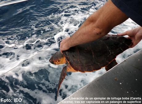 Captura tortugas