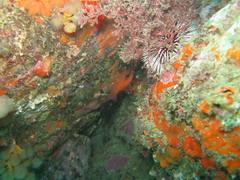 habitat marino
