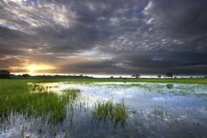 Ecosistema en desembocadura del Orinoco