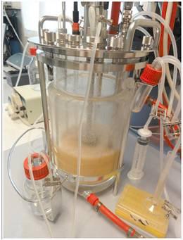 Aporte de omega3 a partir de fitoplancton